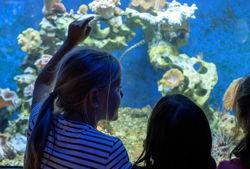 aquazoo düsseldorf aquarium