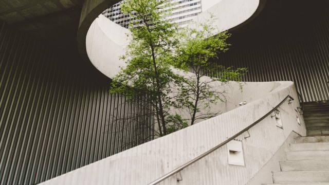 Et træ, som står i midten af en bygning. Det symboliserer den prioritering det er at investere bæredygtigt