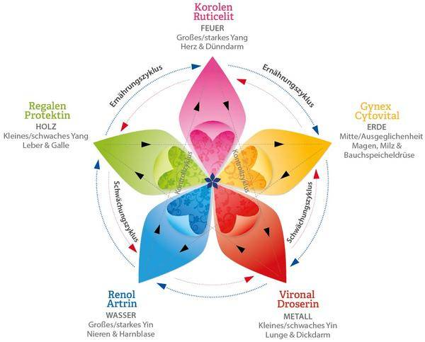Regeneration im Pentagramm