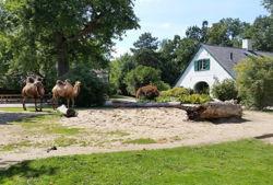 zoo krefeld trampeltieranlage