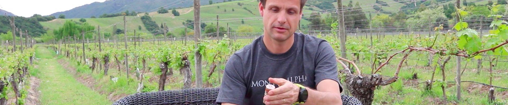 Los Mitos y Beneficios de la Tapa Rosca en el Vino