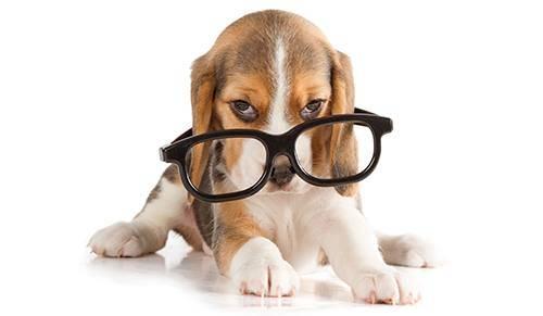 Puppy - FAQ