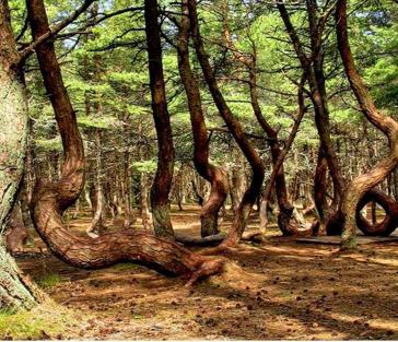 Куршская коса и Зеленоградск: древние легенды и сказочная реальность