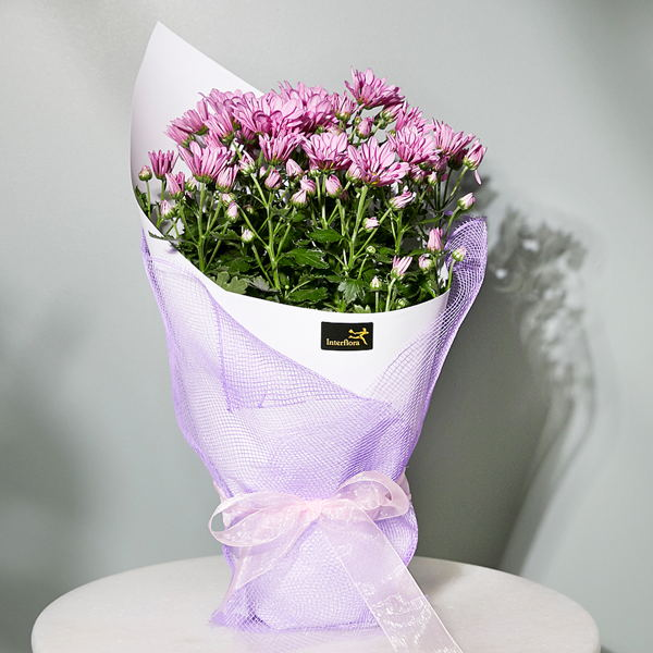 Seasonal Flowering Plant_flowers_delivery_interflora_nz