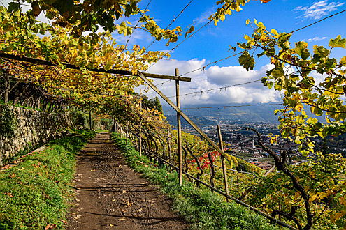 Merano - A Waalweg trail that runs through a vineyard