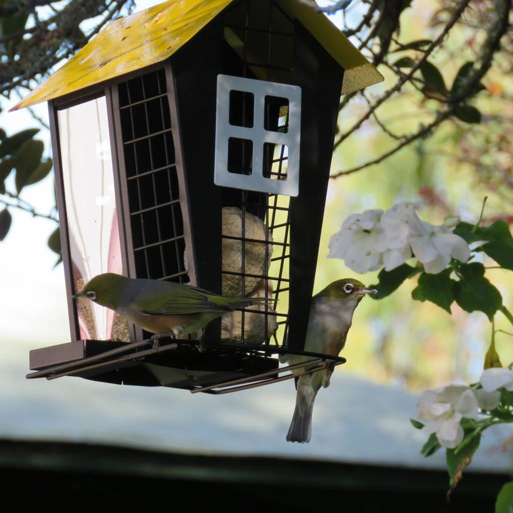 Topflite premium wild bird feeder - a restaurant for the birds in your garden!