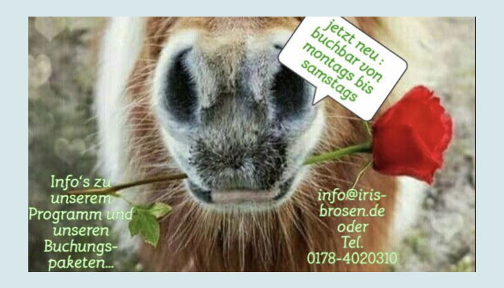 iris brosen pferd kindergeburtstag feiern