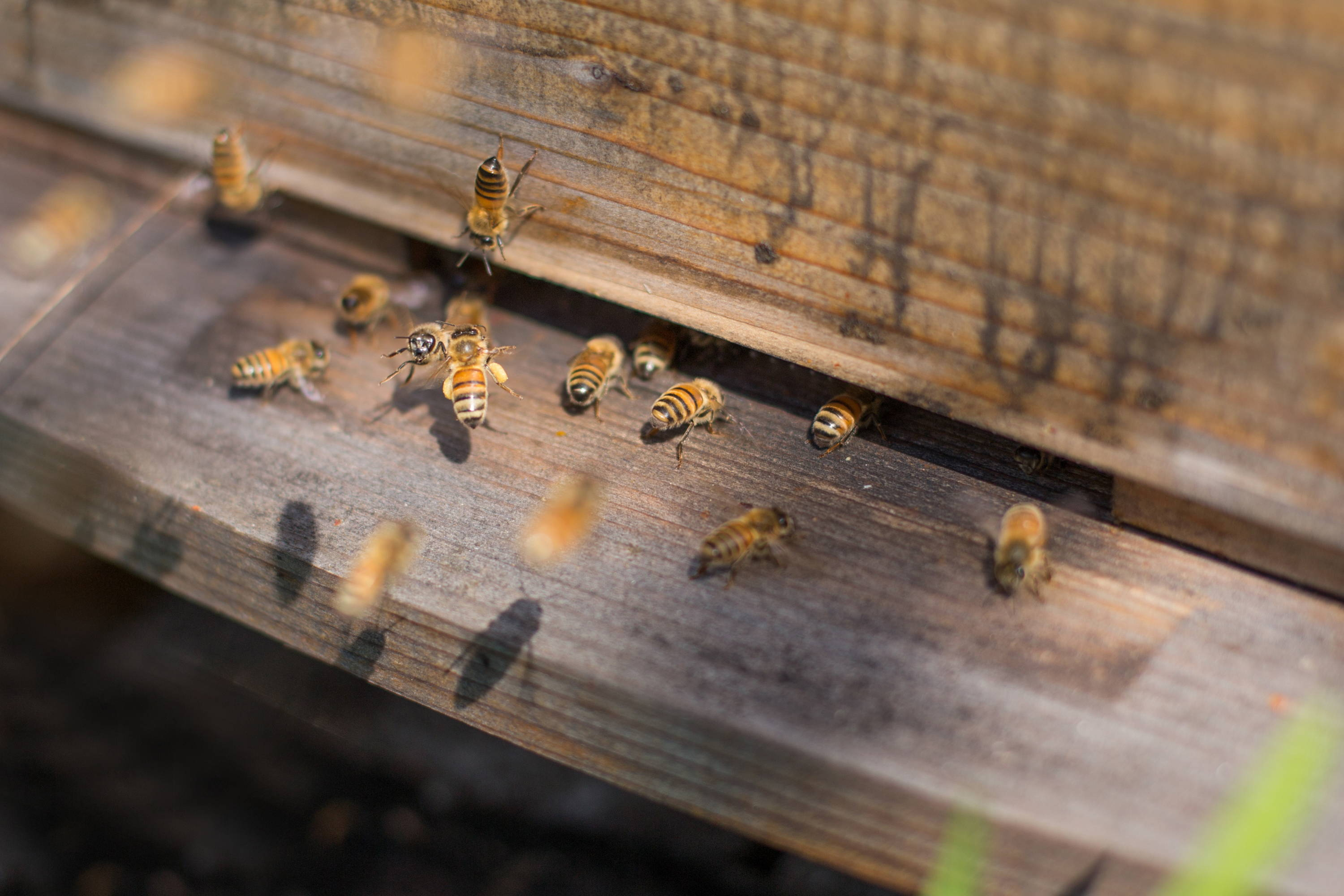 Click to learn more about buying your first hive