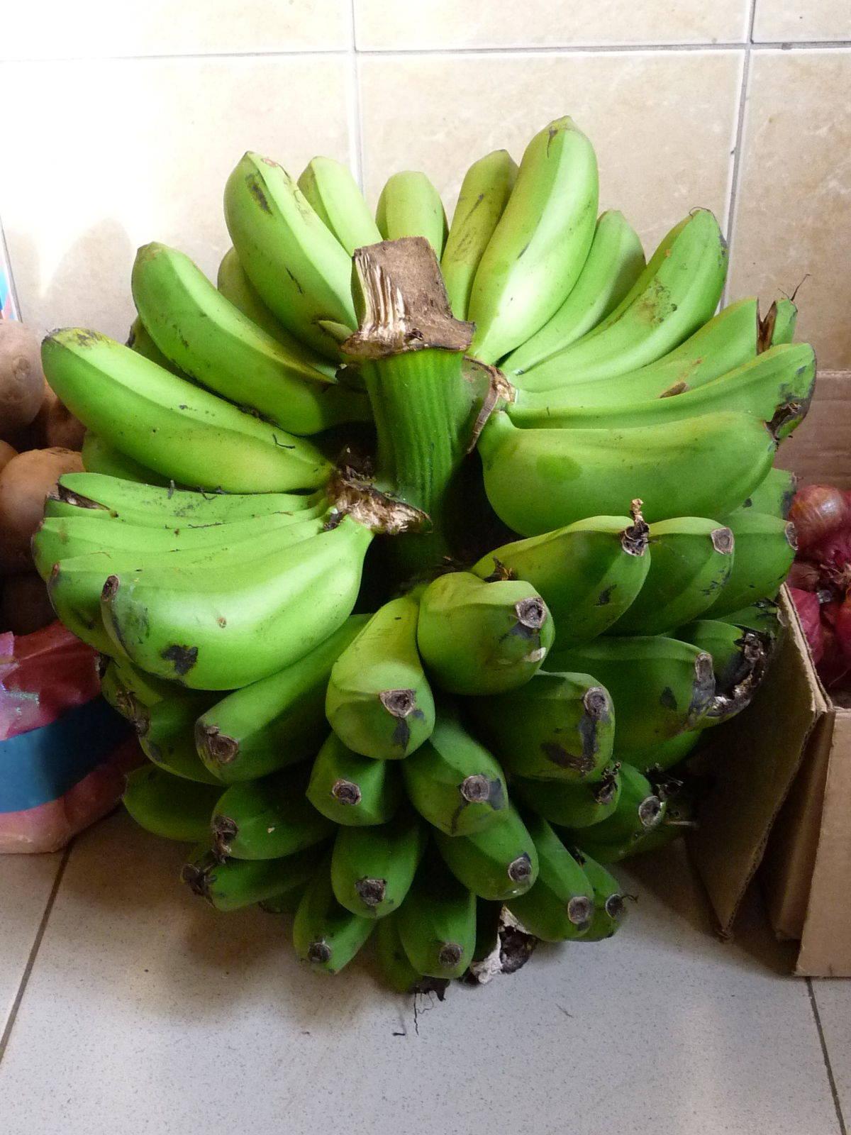 unripe plantains (matoke)