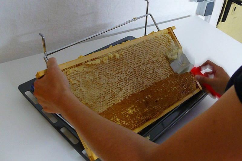 Johanna entdeckelt eine Honigwabe