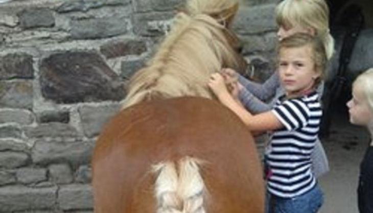 die reitzwerge kinder pflechten pferd zöpfe