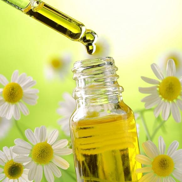 Roman Chamomile Oil Production