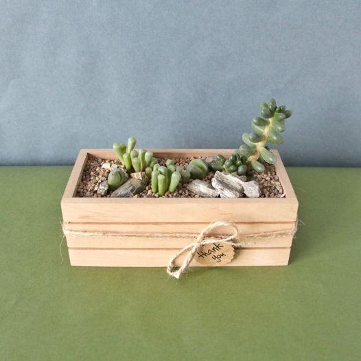 Эко-ящик с живыми камнями