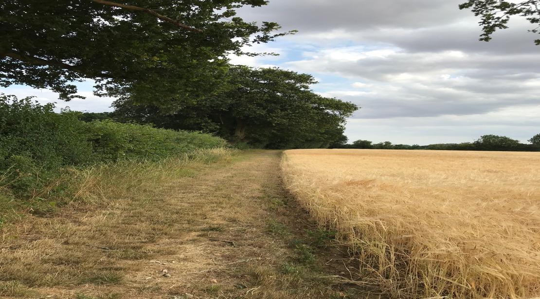 Suffolk hedgerow