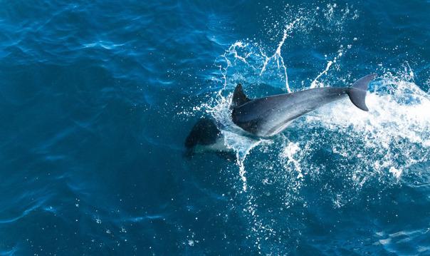 Наблюдение за дельфинами на судне со стеклянным дном (Playa Tora Paguera)