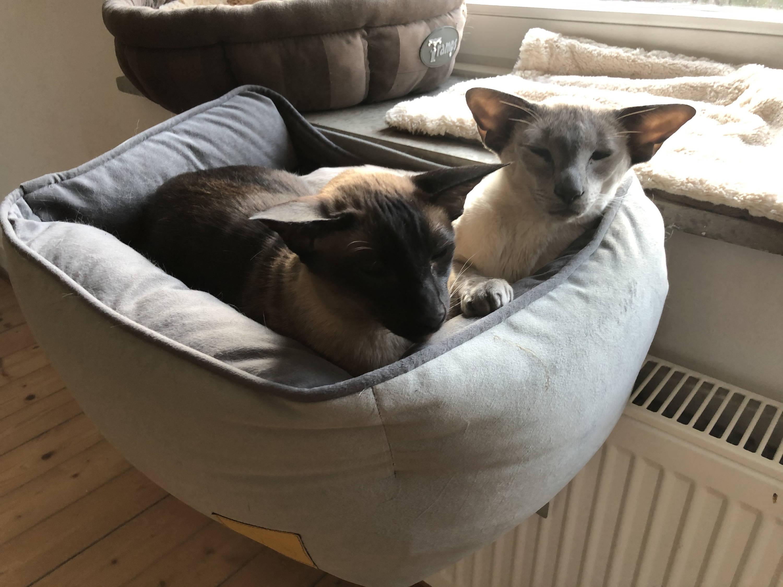 CAT CAMINO® Katzen-Heizungsliege