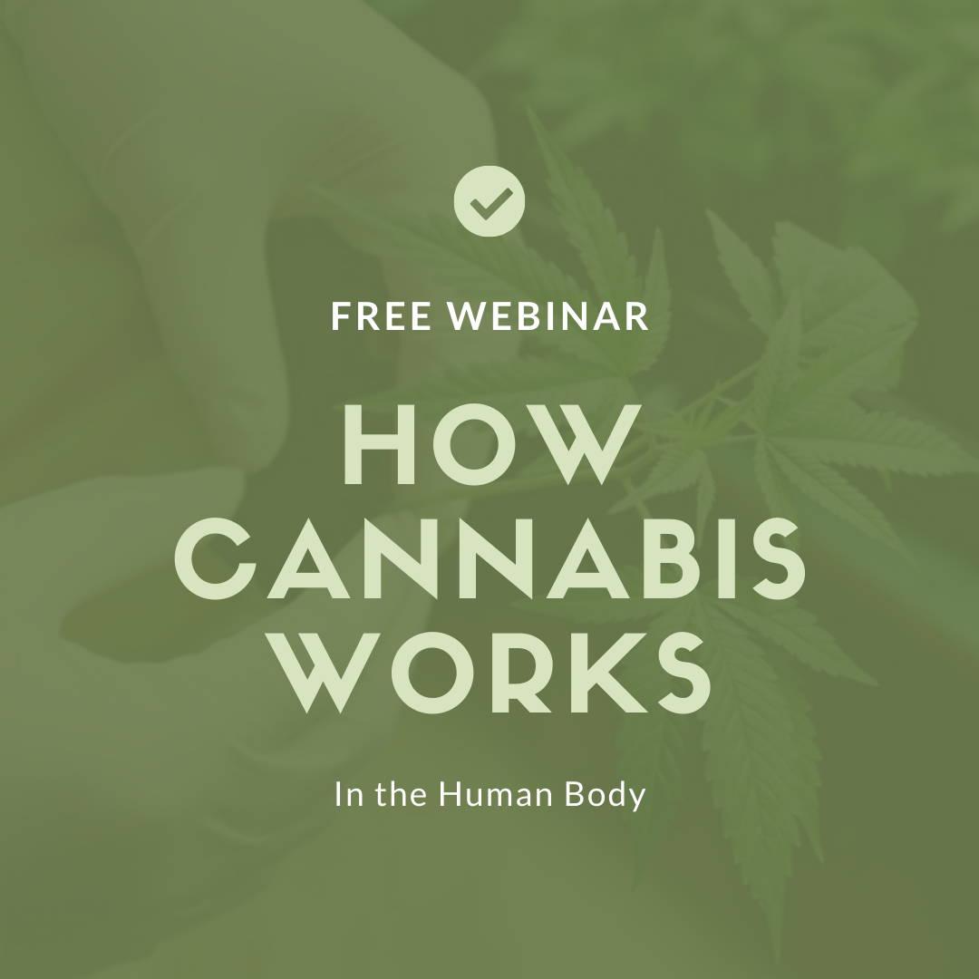 how cannabis works nz