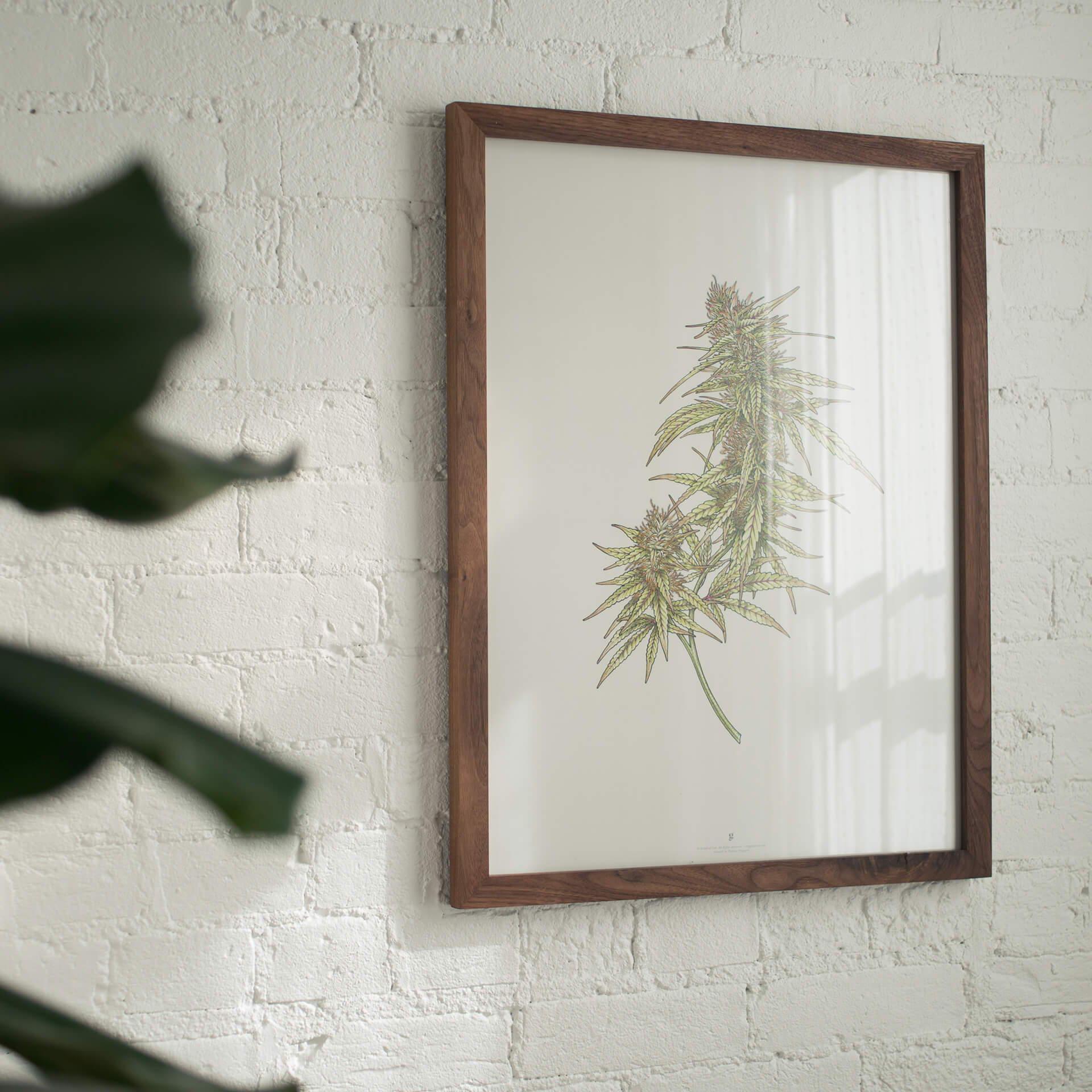 Goldleaf Cannabis Botanical Illustration Collection