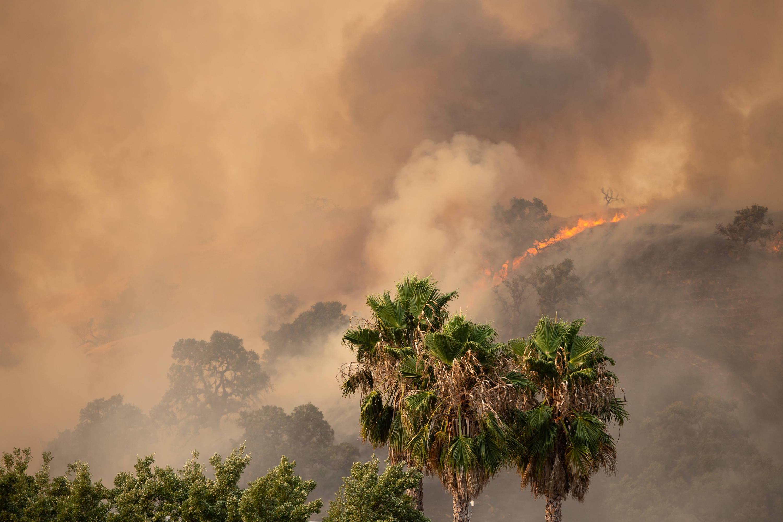 Trees ablaze with smoke