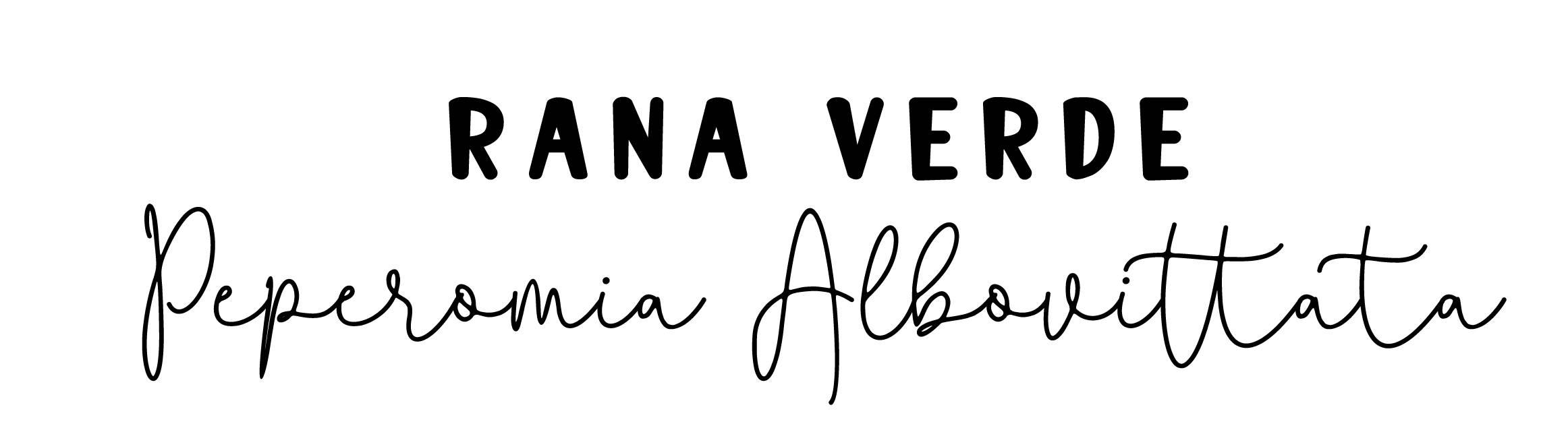 Rana Verde: Peperomia Albovittata Rana Verde