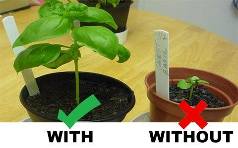 Best LED Grow Light,  Growing fast weed