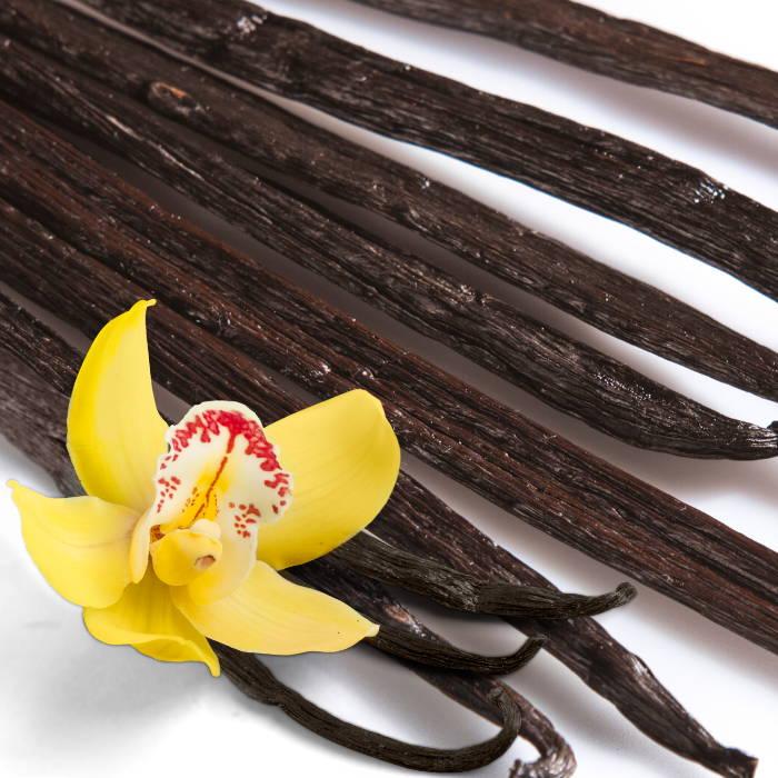 Vanilla Bean oil
