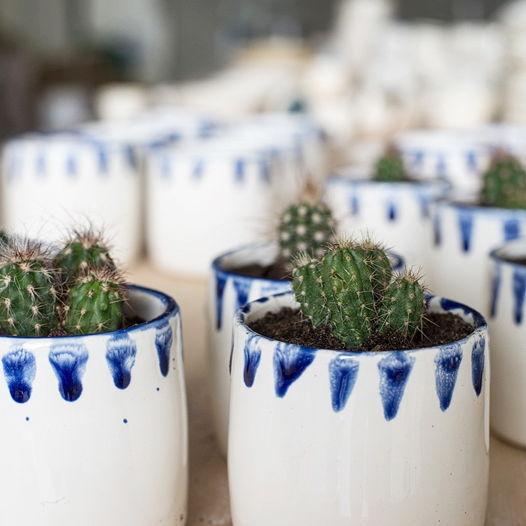 Белый/синий стакан с кактусом