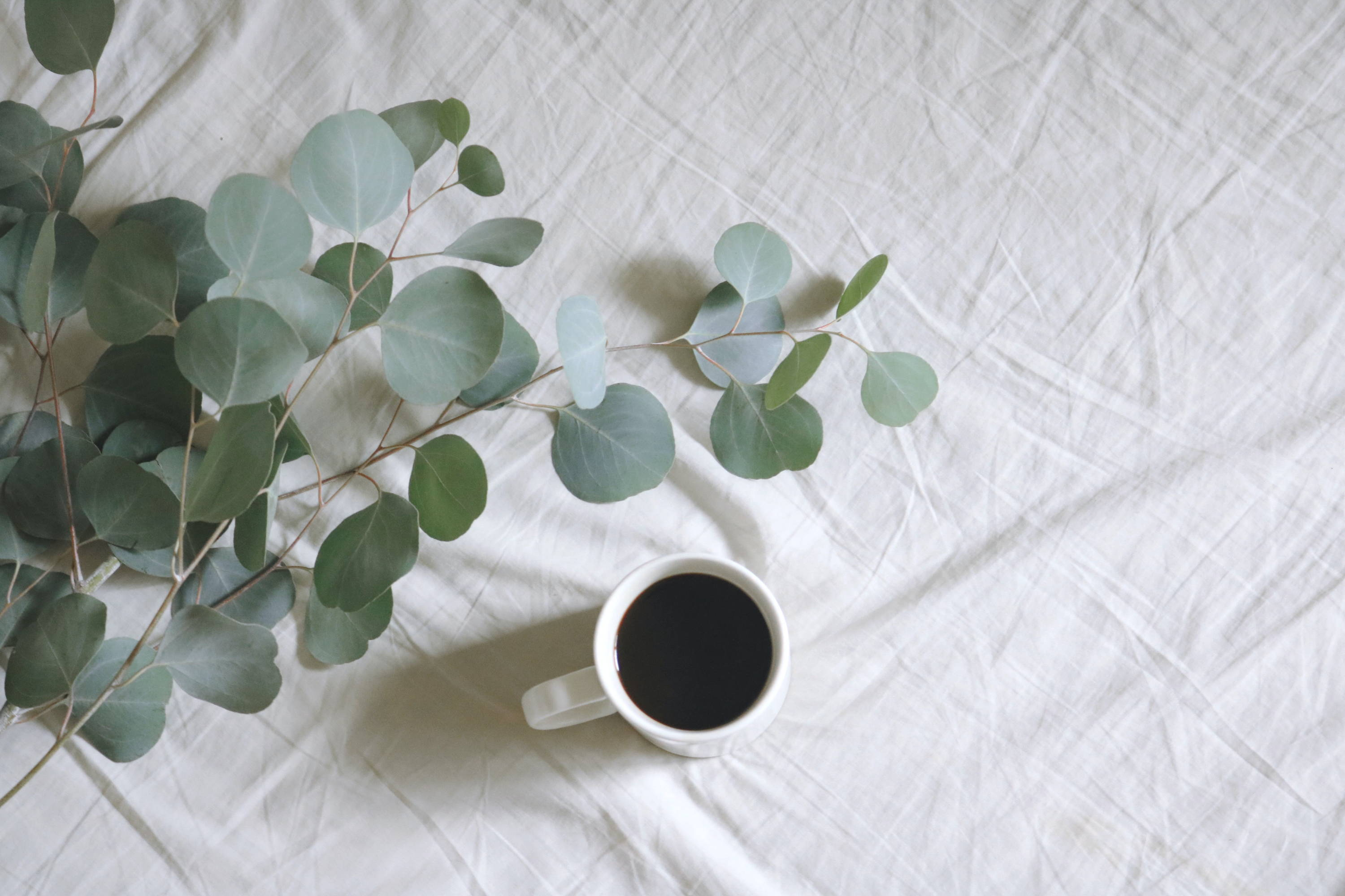 6. Flat lay photography of white mug beside green leafed plants