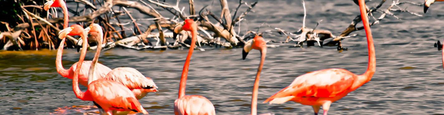 Сафари на лодке в мангровых зарослях и лагунах