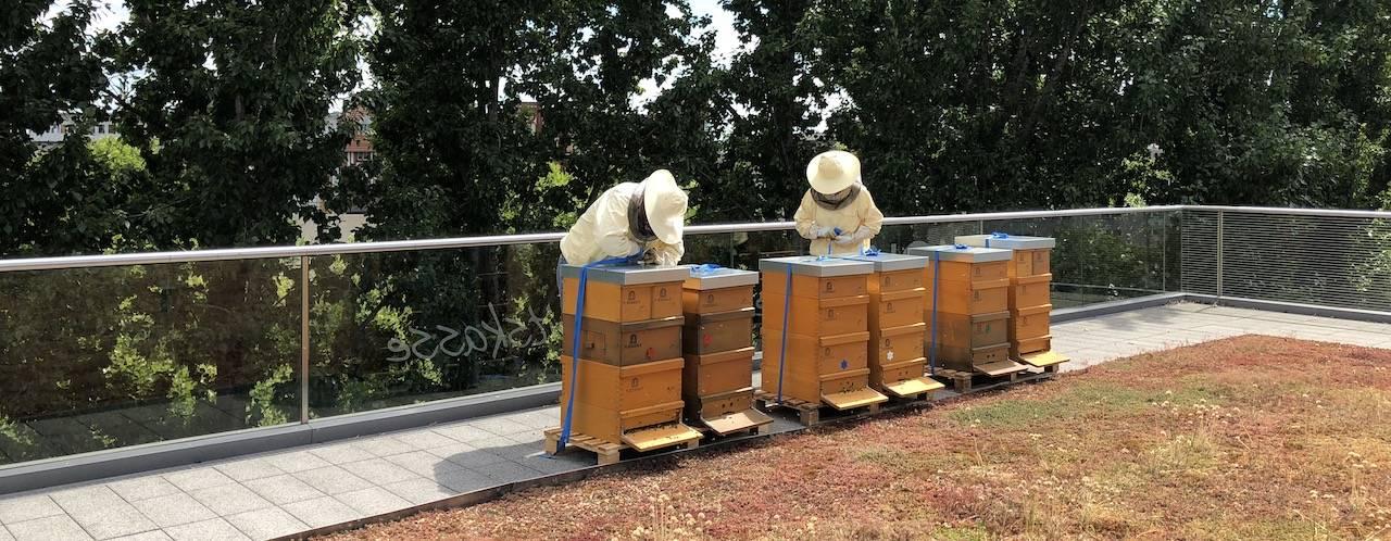 Bienenvölker mit den Imkern Johanna und Wolf auf der Dachterrasse der AOK Nordost in Berlin Kreuzberg