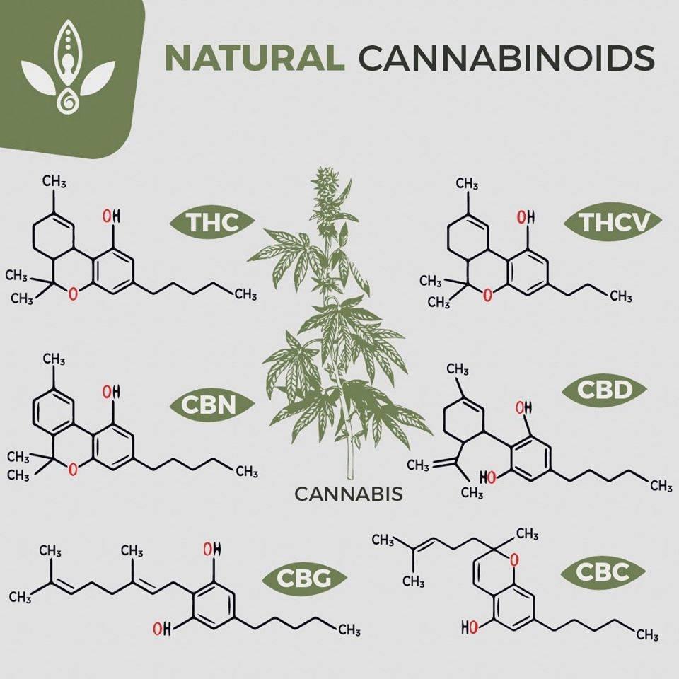 whole plant cbd oil