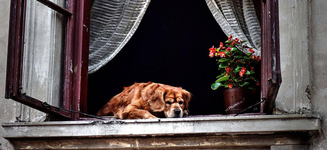 Den Hund allein zu Hause lassen - Titelbild