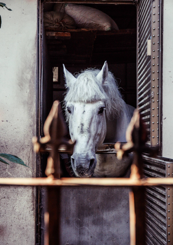 white pony in box