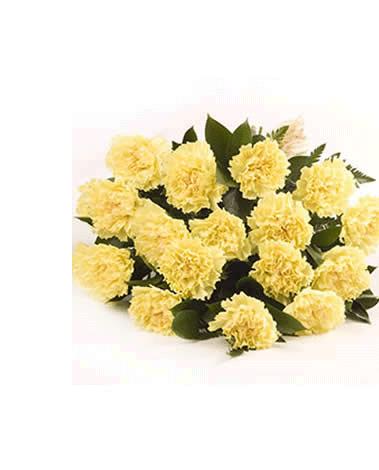 HF Dozen Yellow Carnations