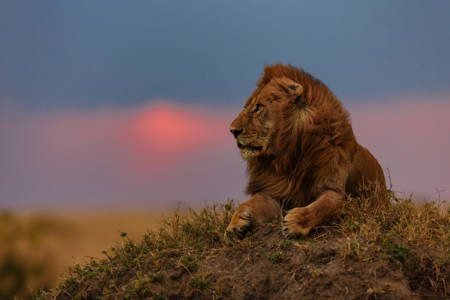 4 Days Masai Mara Safari in Shoulder Season