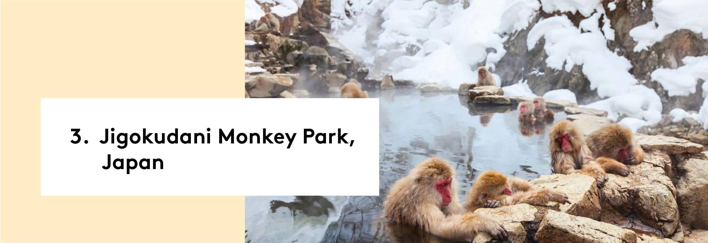 3. Jigokudani Monkey Park, Japan