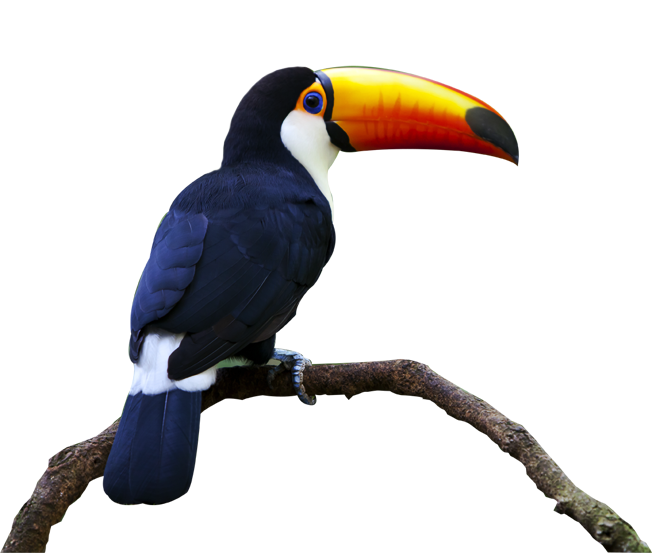 yellow and orange beaked toucan perching on a branch