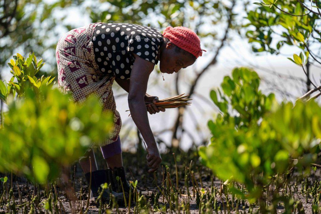 Mozambiqueone 1024x683