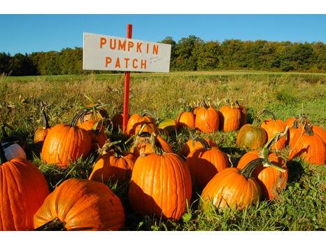 Spookley's Pumpkin Patch Experience