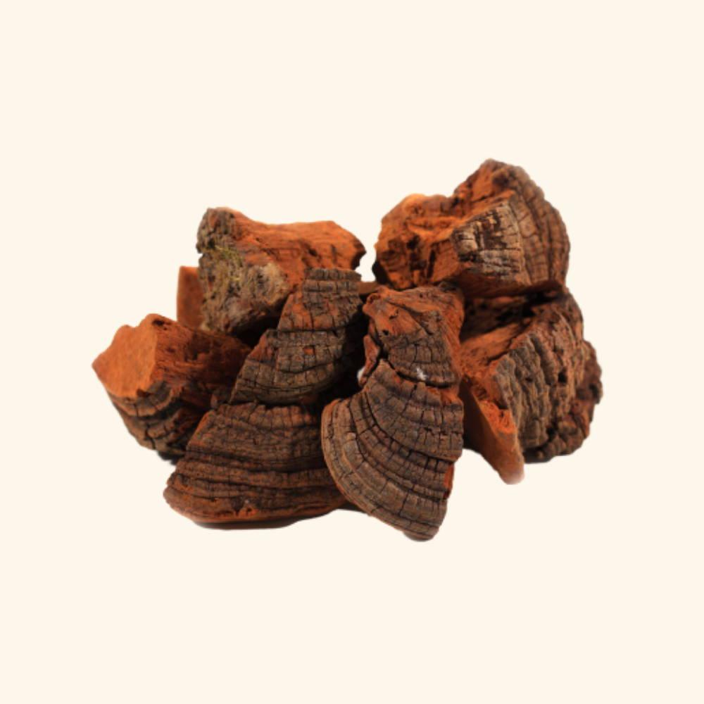 Phellinus Mushroom