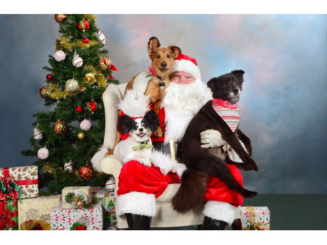 Picture Your Pet with Santa Spokespet