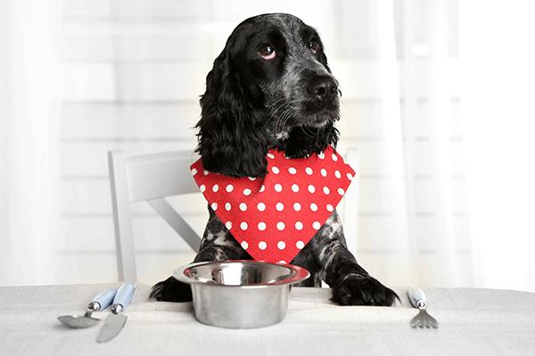 Table Scraps Pets Academy Animal Hospital