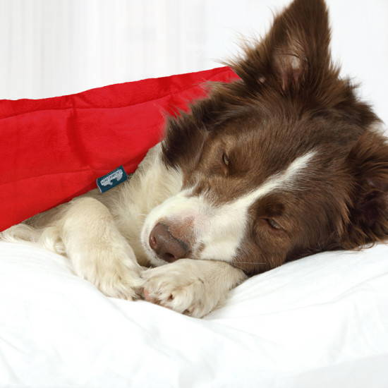 Smooth minky weighted blanket for a medium dog