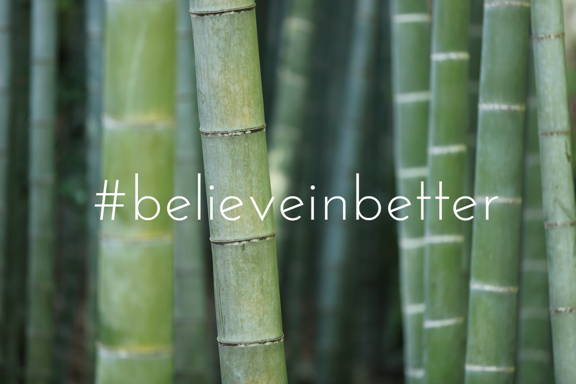 Bamboo is nature's most renewable and sustainable resource as it is one of the fastest growing plants in the world