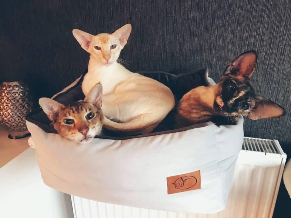 Katzen in Heizungsliege
