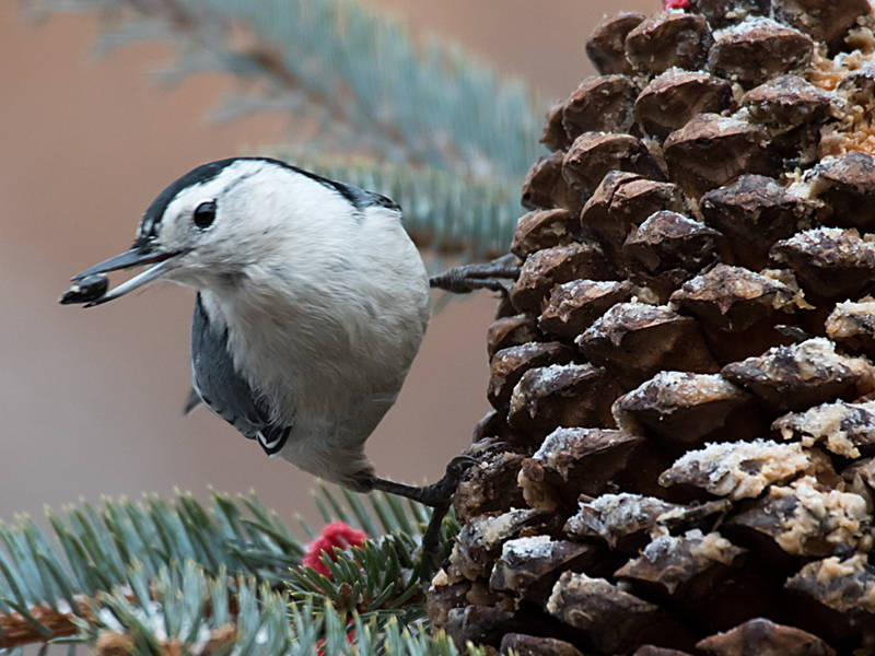 DIY Pine Cone Bird Feeder Tutorial