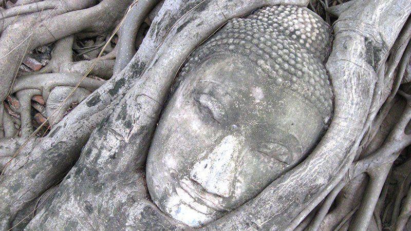 Tree Buddha, Ayutthaya, Thailand