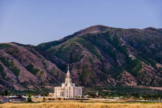 A yellow field and the Payson Utah Temple in front of a