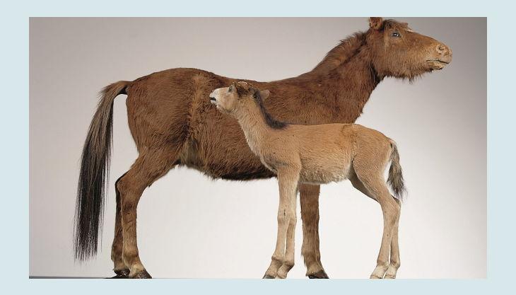 westfälisches pferdemuseum ungezähmt und eingezäunt