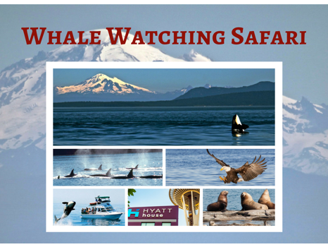 Whale Watching Safari